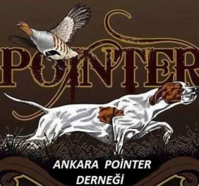 Pointer Köpeği Üreti...